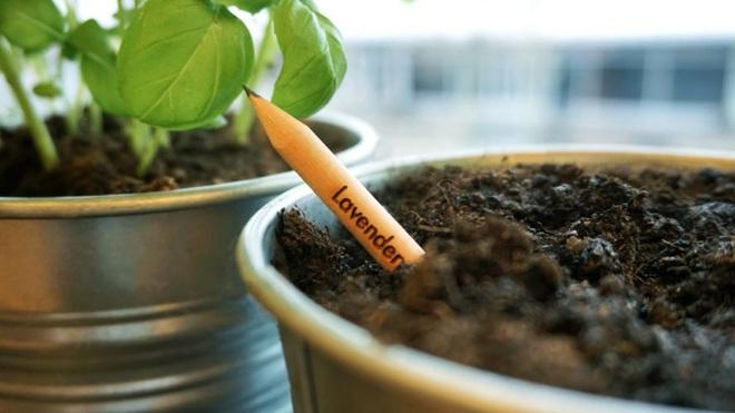 Đây là chiếc bút chì ma thuật, cứ cắm vào đất rồi chăm chỉ tưới nước là sẽ mọc thành cây - Ảnh 3.