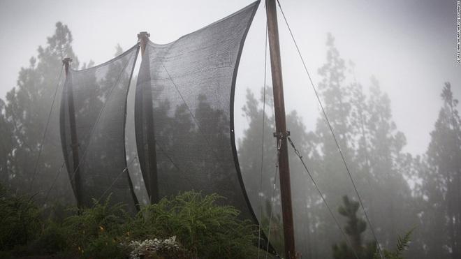 Lưới bắt sương để lấy được nước: công nghệ đơn giản có thể thay đổi cuộc sống của cả triệu người - Ảnh 1.