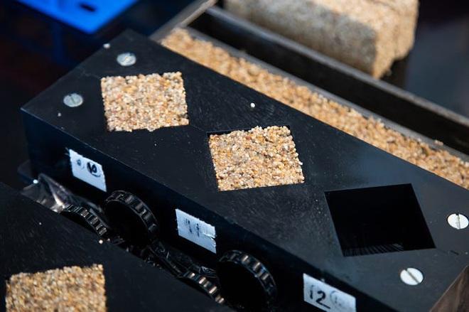 Khoa học tạo ra gạch sống: những viên gạch biết quang hợp, hấp thụ CO2, sinh sản được mà vẫn cứng cáp như thường - Ảnh 2.