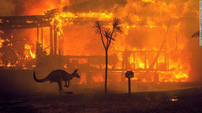 Việc giải cứu động vật hoang dã trong đại thảm họa cháy rừng ở Úc diễn ra như thế nào? - Ảnh 1.
