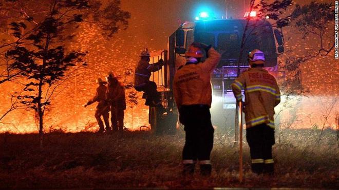 Việc giải cứu động vật hoang dã trong đại thảm họa cháy rừng ở Úc diễn ra như thế nào? - Ảnh 2.