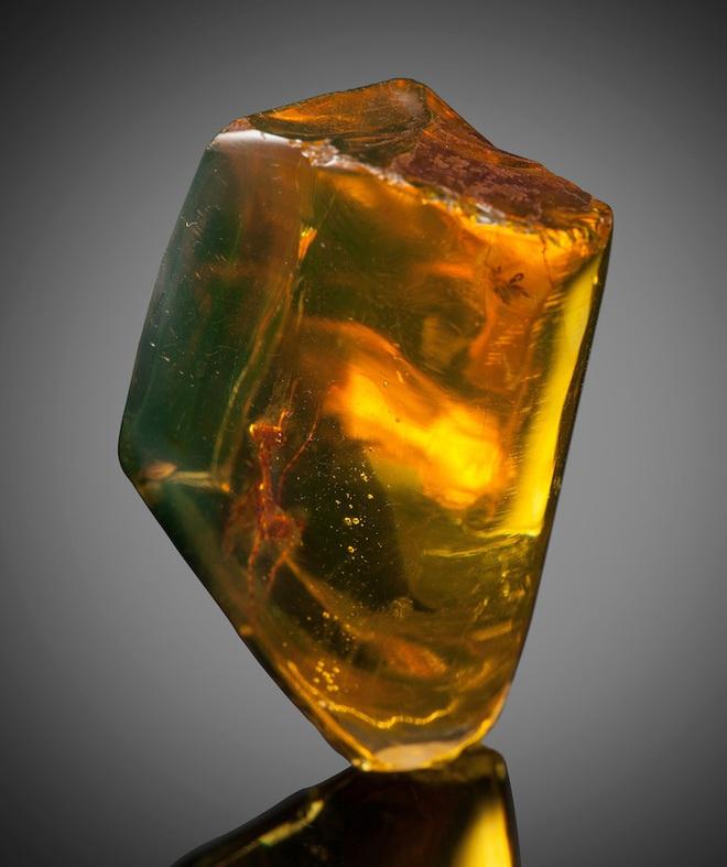 Bọ ngựa 30 triệu năm tuổi được bảo quản hoàn hảo trong mảnh hổ phách - Ảnh 3.