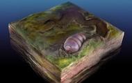 Các nhà khoa học tìm ra hóa thạch 555 triệu năm tuổi của tổ tiên con người