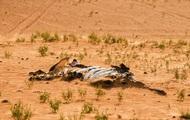 Cảnh báo đỏ: Đại tuyệt chủng lần 6 đang diễn ra nhanh hơn nhiều so với mọi dự báo, lỗi hoàn toàn do con người