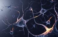 Não bộ của bạn có bao nhiêu neuron thần kinh? Và chúng đang làm gì trong đó?