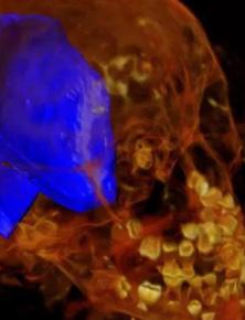 Ảnh chụp X-quang hé lộ khám phá đầy bất ngờ bên trong xác ướp Ai Cập 2000 năm tuổi