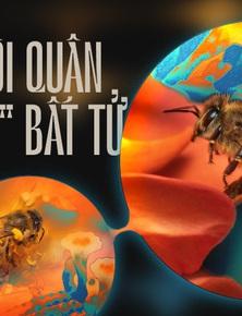 """Một con ong ở Châu Phi đã tự nhân bản nó hàng triệu lần kể từ năm 1990 tới nay và tạo ra một đội quân """"clone"""" bất tử"""