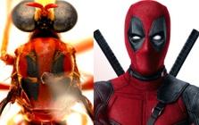 Phát hiện 5 loài ruồi sát thủ mới, đặt tên theo các siêu anh hùng trong vũ trụ điện ảnh Marvel