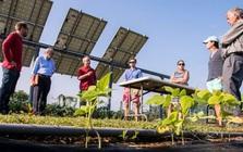 Điện nông: Những cánh đồng năng lượng mặt trời bốn trong một của thế hệ trẻ