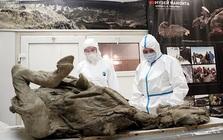 Các nhà khoa học rã băng vĩnh cửu ở Tây Tạng, tìm thấy 28 chủng virus cổ đại chưa từng được biết đến