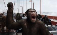 Một bầy tinh tinh ở Châu Phi đã biết tấn công bài bản vào một bầy khỉ đột, con người hãy cẩn thận