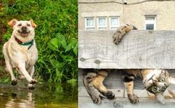 Cười nghiêng ngả với 14 bức hình thắng Giải nhiếp ảnh động vật hài năm 2020