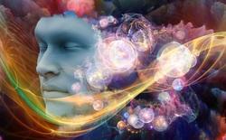 Tại sao các nhà khoa học biết động vật có thể nằm mơ?