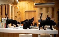 Nekobiyaka - Quán cà phê mèo đen độc nhất vô nhị trên thế giới