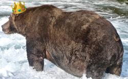 """Đây là """"nhà vô địch rửng mỡ"""" của cuộc thi Tuần lễ Gấu béo năm 2020"""