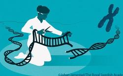 Một kỹ sư CRISPR giải thích tại sao công nghệ chỉnh sửa gen này xứng đáng đoạt giải Nobel Hóa học năm nay