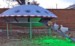 Hóa ra xây chuồng gà cũng có thể sáng tạo được tới mức này