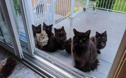 Người phụ nữ bị mèo hoang kéo cả nhà đến bắt đền vì trót dại cho mèo mẹ ăn