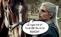 The Witcher: Sử dụng nhiều hơn 1 con ngựa nhưng tại sao Geralt luôn gọi chúng là Roach?