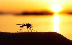 Trong vòng xoáy bất tận của dịch bệnh: Con người bây giờ đang truyền ngược ký sinh trùng sốt rét lại cho muỗi