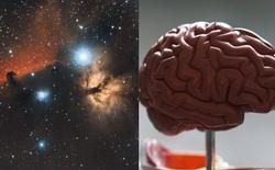 Các nhà khoa học kinh ngạc khi phát hiện sự tương đồng kỳ lạ giữa não người và vũ trụ