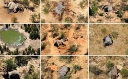 Tìm ra thủ phạm đã giết chết 330 con voi bên cạnh hồ nước
