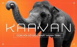 Nhờ sức mạnh của tiếng hát, con voi cô độc nhất hành tinh tìm thấy tự do cho mình sau nhiều thập kỷ sống trong xiềng xích
