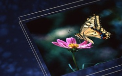 Hiệu ứng cánh bướm tại nhà máy kính Nhật Bản: Mất điện 5 giờ, sửa chữa 4 tháng và hệ quả chấn động ngành công nghiệp màn hình