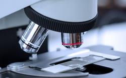 Các nhà khoa học vừa tìm ra cách nhìn thẳng qua hộp sọ của bạn mà không cần khoan một lỗ