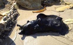 Phát hiện loài sên biển lớn nhất thế giới có vẻ ngoài giống như người ngoài hành tinh