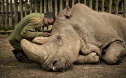 25 tác phẩm chung kết giải nhiếp ảnh quốc tế sẽ cho bạn thấy 7749 sắc thái của thế giới động vật: Tươi đẹp, kỳ lạ và rất khắc nghiệt