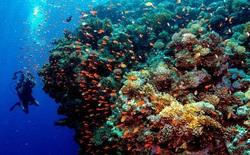 Khoa học cảnh báo: 70-90% san hô sẽ biến mất trong 20 năm tới, và tuyệt chủng trong 80 năm nữa