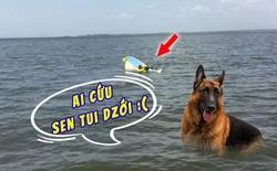 Chú chó bơi lênh đênh trên biển trong suốt 11 giờ để tìm người cứu giúp chủ nhân sắp bị đuối nước