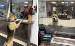 Nửa đêm, chú chó lạ tự bước vào sở cảnh sát để báo án về vụ mất tích của...chính mình