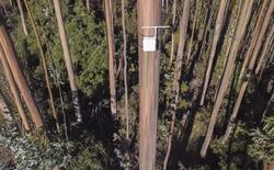 """Chi-lê: Kiểm lâm lắp """"mũi kỹ thuật số"""" trên cây cao để ngửi được mùi khói cháy rừng"""