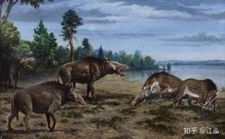 Loài lợn khổng lồ cổ đại: Kẻ khủng bố của Bắc Mỹ thời tiền sử