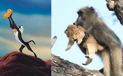 The Lion King đời thực là đây: Chú khỉ đầu chó vừa leo trèo vừa bế sư tử con, quyết không buông tay