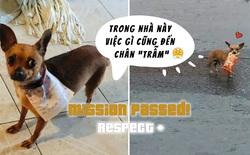 Ở nhà tránh Covid-19, anh thanh niên nhờ cún cưng đi mua hộ bim bim