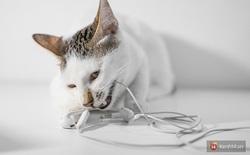 Bị boss mèo cắn đứt vài lần mới thấy, hóa ra Tim Cook và Apple đã đúng khi đẩy mạnh xu hướng tai nghe không dây!