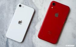 Ai cũng nói camera iPhone SE 2020 giống iPhone XR, sự thật là thế nào? Mời bạn đọc bình chọn ảnh chụp từ máy nào đẹp hơn