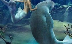 Tại sao sinh vật biển chủ yếu là động vật ăn thịt và hiếm khi nhìn thấy động vật ăn cỏ biển?