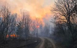 Chernobyl cháy lớn, mức phóng xạ trong khu vực cao gấp 16 lần mức bình thường
