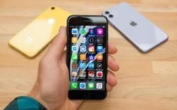 Apple có đang khiến doanh số iPhone 11 bị ảnh hưởng khi tung ra iPhone SE mới