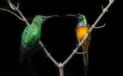 Những bức ảnh chụp chim đầy màu sắc của nhiếp ảnh gia phải cách ly tại nhà mùa dịch