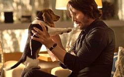 Đạo diễn John Wick từng phải đấu tranh kịch liệt để giữ lại cảnh phim sát hại chú chó trong phần 1 nhằm gây shock cho khán giả
