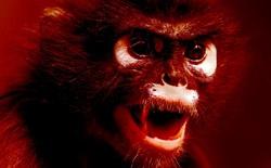 Vất vả chữa trị cho người bệnh chưa xong, phòng thí nghiệm Ấn Độ còn bị lũ khỉ xông vào cướp mẫu máu nhiễm Covid-19