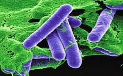 Đâu là hóa chất độc nhất trên đời, chỉ vài trăm nanogram cũng có thể gây chết người?