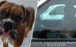 Ngồi đợi trong xe quá lâu, chú chó bấm còi inh ỏi để gọi chủ đang đi mua sắm quay về