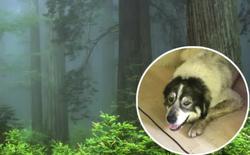 """Tìm mãi không ra chú chó đi lạc trong rừng, anh thanh niên bắc luôn dàn loa siêu khủng để gọi """"boss"""" quay về"""