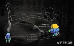 Cá cổ đại tiết lộ bí ẩn về nguồn gốc của ngón tay con người